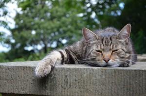 Kat slaapt en heeft nergens zin in