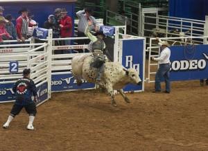 Cowboy op stier vertrekt uit startblokken