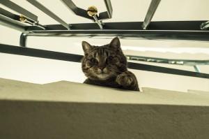 cat-717394_640