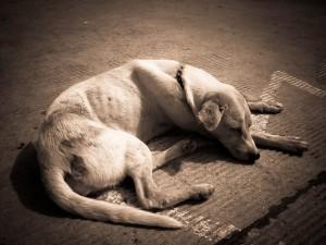 dog-218110_640